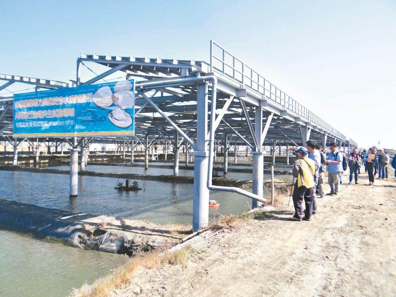 台西漁電共生試驗場採立柱光電,可大幅改善現有的養殖環境和水質,試驗養殖成功。 記...