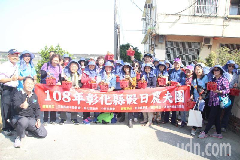 彰化縣農會舉辦「假日農夫團」,民眾體驗採小蕃茄。記者林敬家/攝影