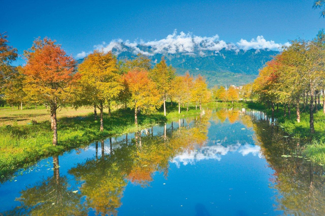 花蓮理想大地度假飯店內有落羽松美景。 圖/業者提供