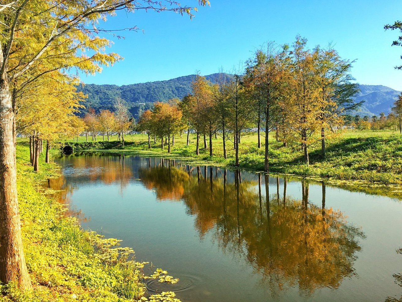 理想大地水面的倒影將藍天白雲、青山綠水,還有金黃落羽松,全都融合在一起,就像是一...