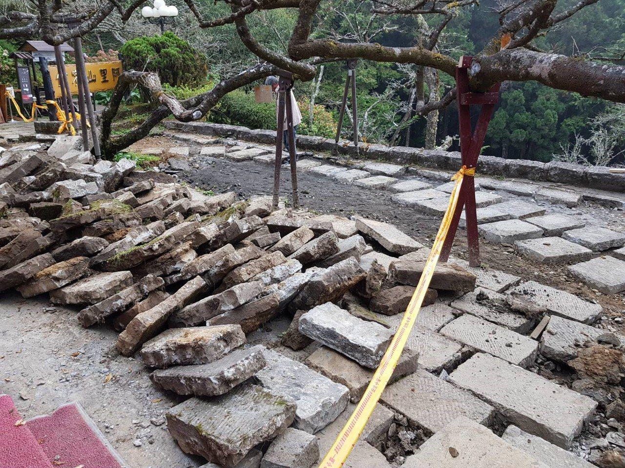 阿里山賓館目前已先將長期壓住染井吉野櫻樹根的石板移除,讓根部能透氣透水。圖/嚴仁...