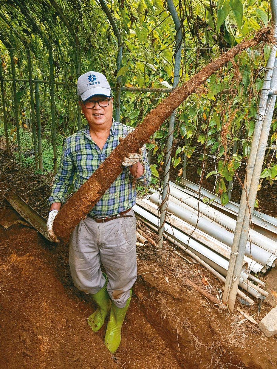 士林陽明山山藥季本月開跑,士林區農會產銷班班長劉勝旋表示,想吃山藥最完整的營養,建 議最好生吃。 記者翁浩然/攝影