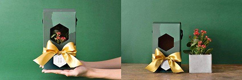 長壽花禮盒。 有肉Succulent & Gift/提供