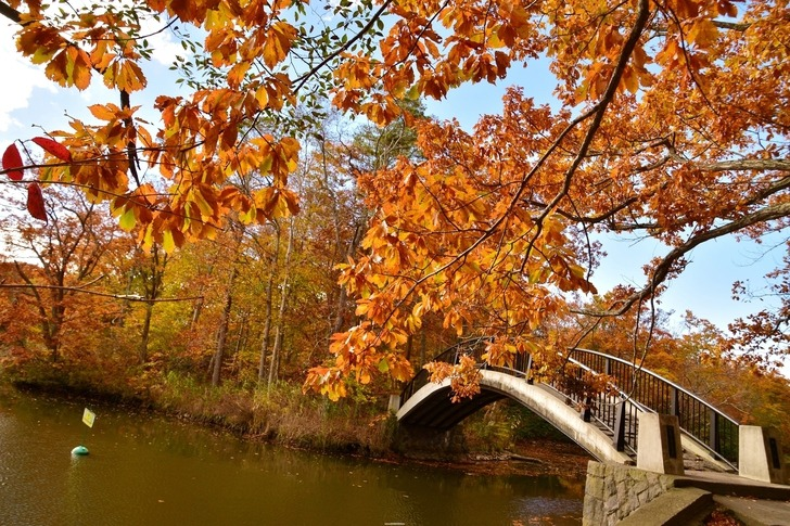 日本北海道/大沼國定公園賞楓,靛藍湖面舖滿落葉