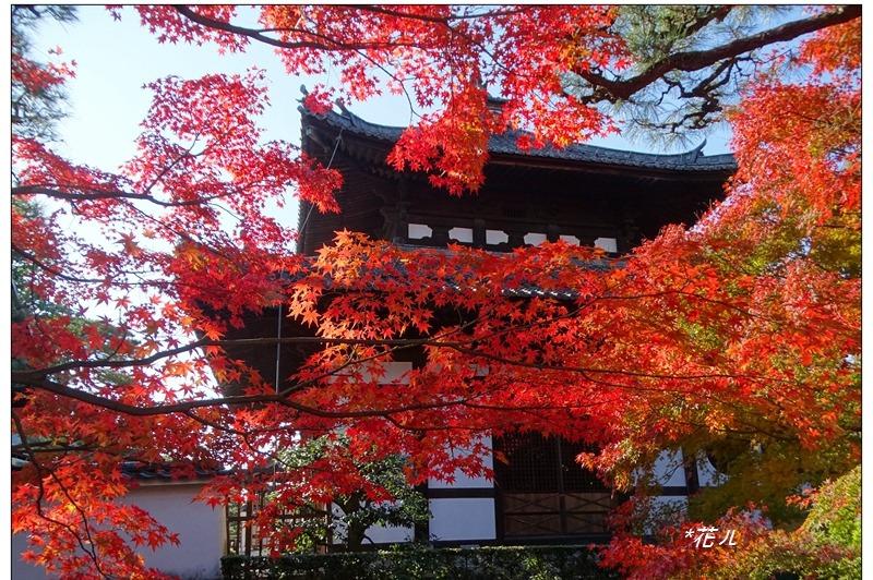 日本/東福寺 名列於京都五山,嫣紅醉人的紅葉