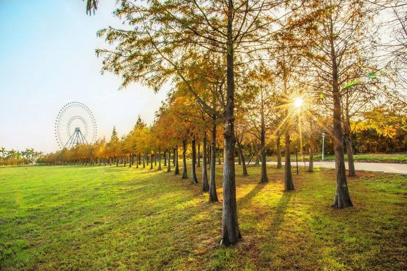 后里千顆落羽松林首對外曝光,搭配麗寶樂園摩天輪形成絕佳美景。圖/麗寶樂園提供