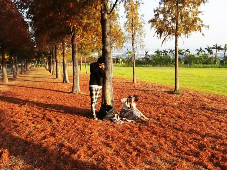 12月進入落羽松最佳觀賞期,葉子染上橘紅色調,是民眾最愛的打卡秘境。圖/麗寶樂園...