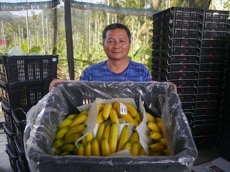 高市旗山溪洲水果批發商郭士男支持馬拉松運動,今年贊助5千多根香蕉招待選手。記者徐白櫻/攝影