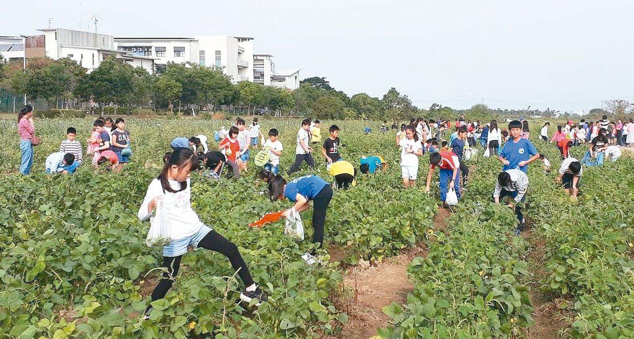 台灣毛豆一年兩收,近年農政單位開辦「毛豆文化祭」,開放民眾下田採摘,促進國人更了...