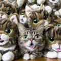 哭哭!全球最紅「吐舌網紅貓Lil Bub」離世了~謝謝你這8年帶來的美好