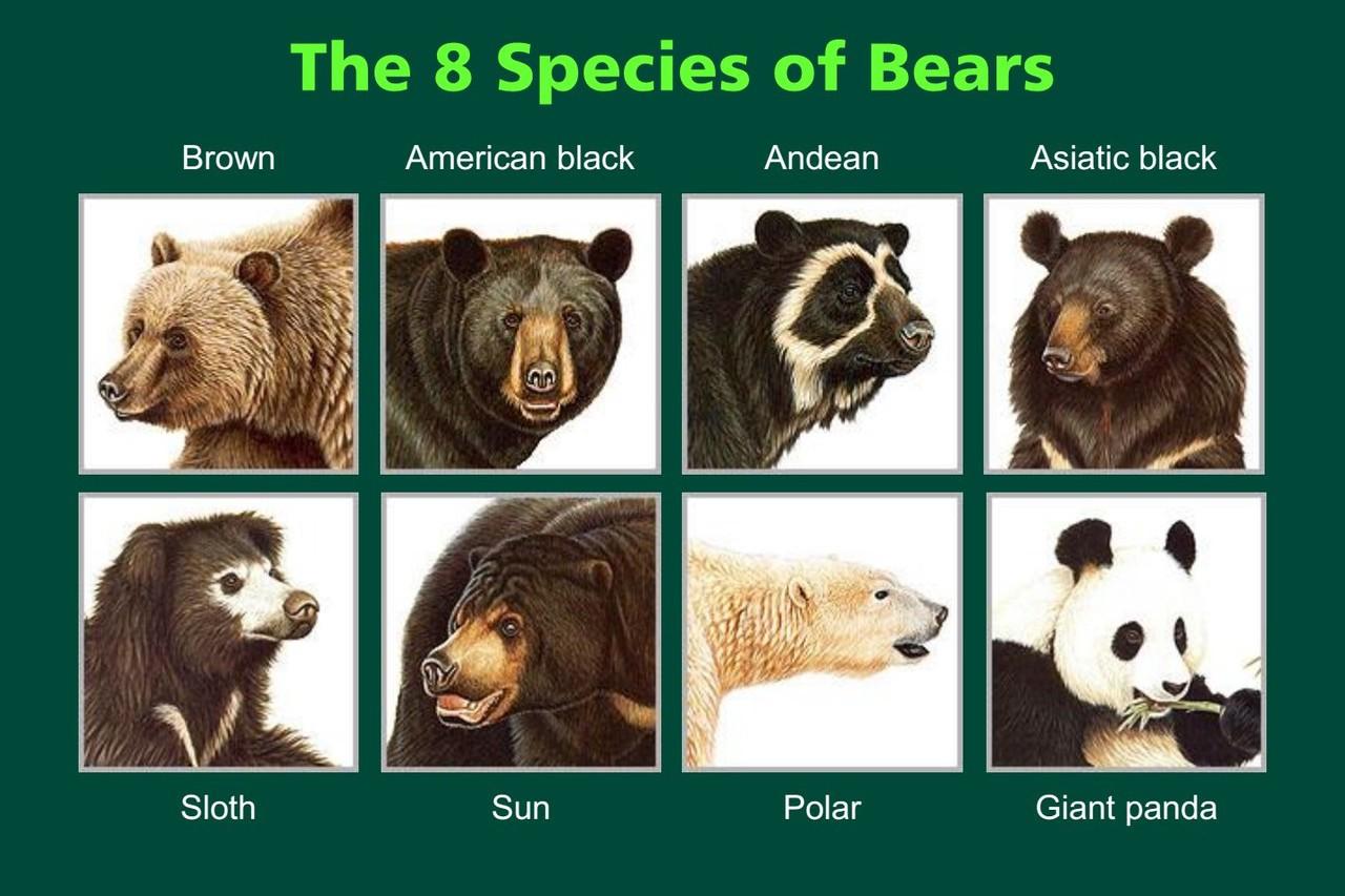 你知道世界上有幾種熊嗎?保育的成功與失敗