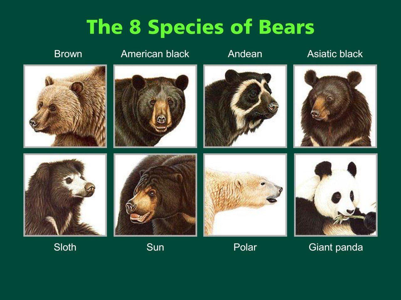 世界上的8種熊。 圖/Davis Garshelis《與熊熊大師有約》簡報