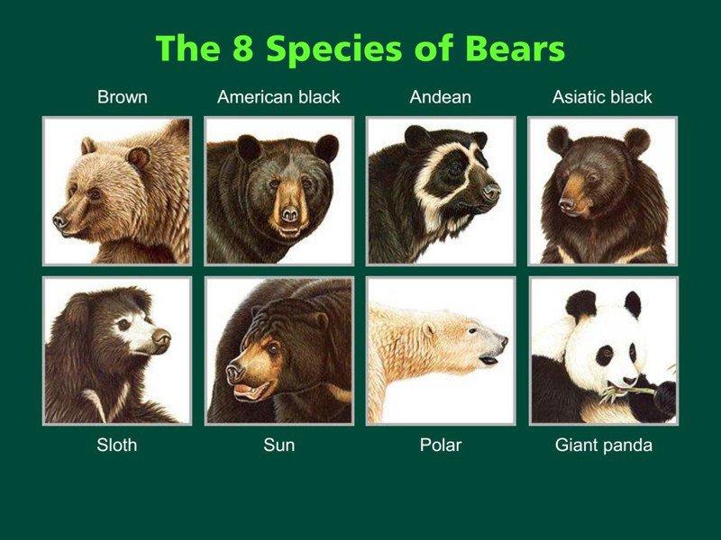 【與熊熊大師有約】世界上的熊:保育的成功與失敗