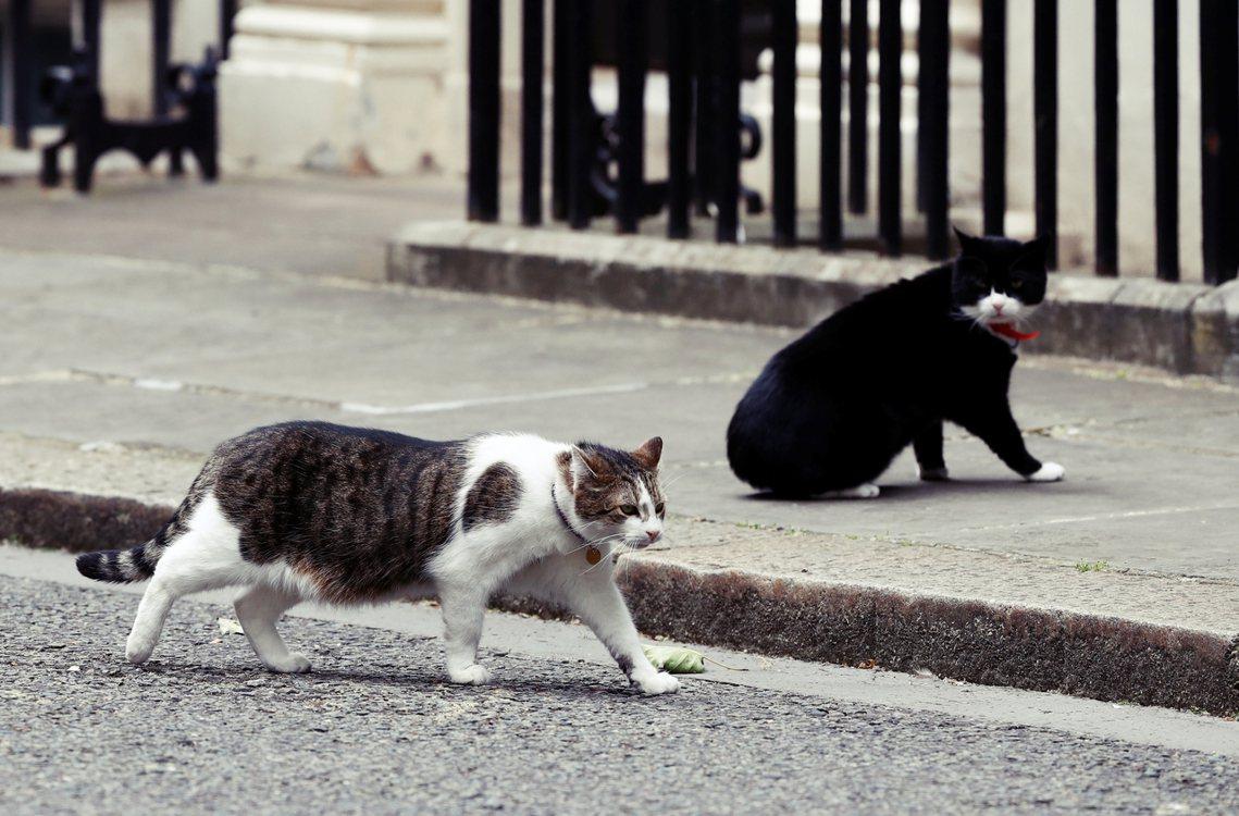 兩貓多次被當眾目睹打架,外界盛傳已久,兩位捕鼠官彼此互有心結。 圖/路透社