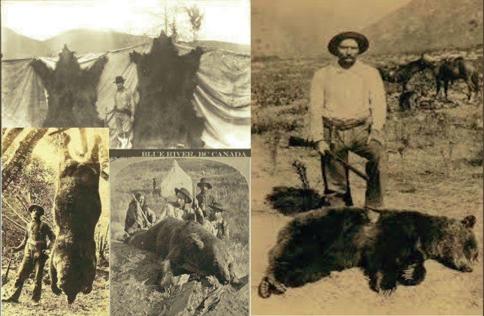 西部開發後,棕熊大量被獵殺。  圖/Bruce  McLellan《與熊熊大師有約》簡報