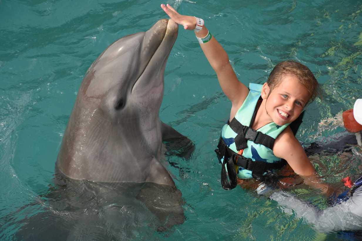 女童與海豚共游變噩夢 被拉入水下攻擊全身傷