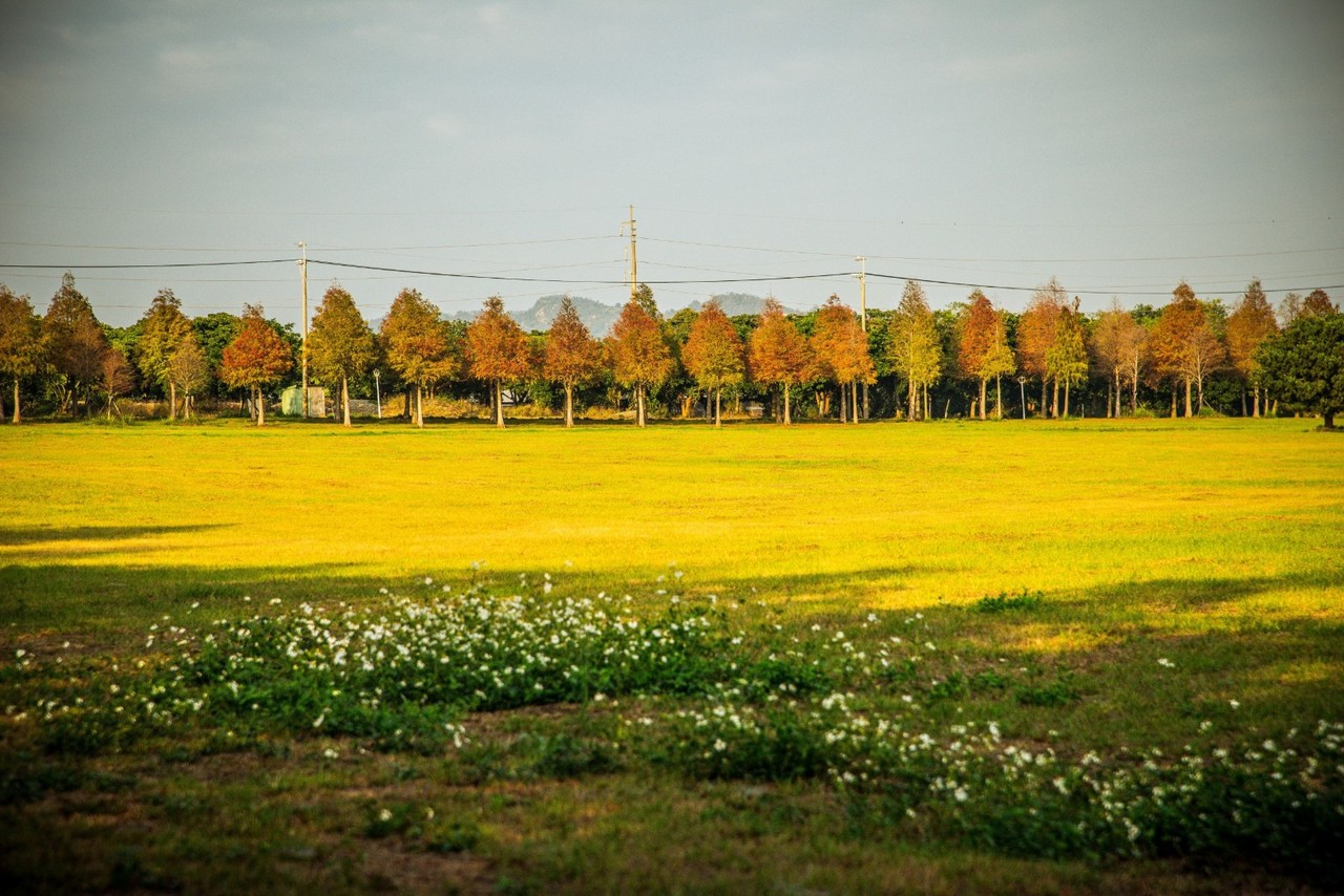 一公里長上千棵落羽松秘境絕美 12月7日開放
