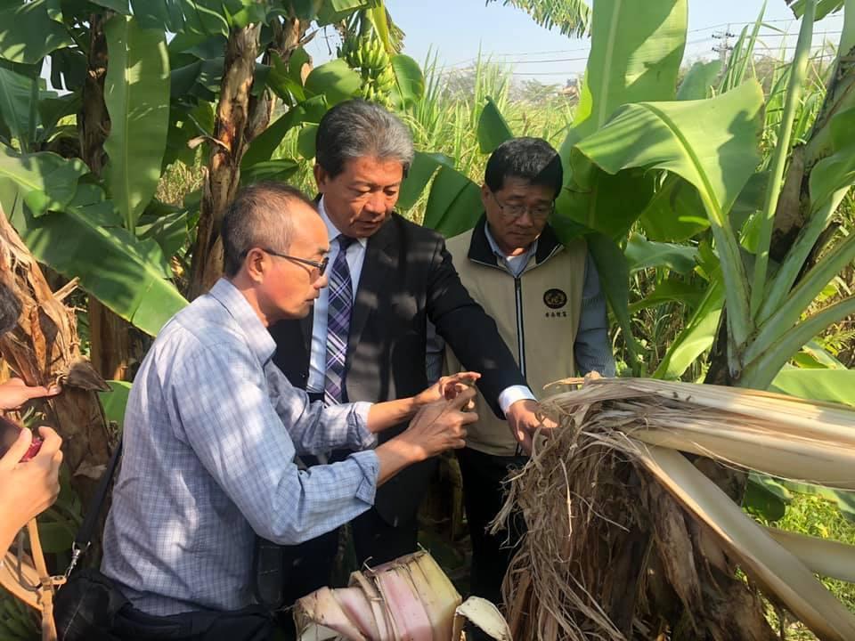 台南安南區香蕉園遭到破壞,議長郭信良現勘,認為有可能是熊出沒。圖/取自郭信良臉書