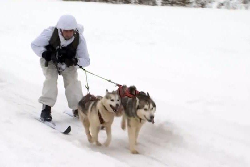 影/瞄準北極圈 俄軍士兵和西伯利亞哈士奇組隊訓練