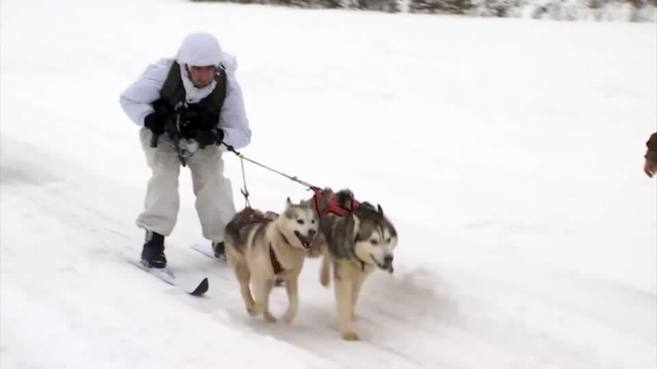俄羅斯國防部2日釋出影片,秀出士兵與西伯利亞哈士奇與雪橇犬一同進行軍事訓練的畫面...