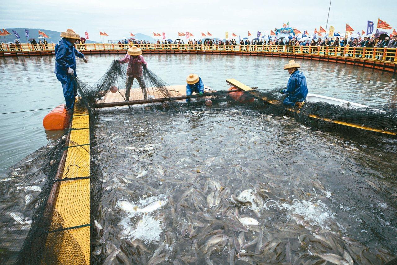 大陸將打造300個海上移動牧場。圖為福建寧德三都澳碧海藍天海洋牧場收穫漁排內的成...