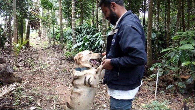 高達將愛犬畫成老虎的樣子,防止猴子破壞作物。圖擷自今日印度
