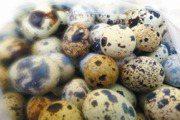 卵磷脂高出雞蛋3倍!專家揭小小一顆鵪鶉蛋有多營養