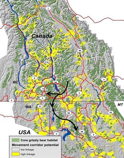 圖中綠色區域為山區中熊群居住的棲地、黃色區域為熊群必須跨越的人類居住區。Proctor博士在此進行保育計畫,希望讓熊跨越黃色區域連結到其他熊群。 圖/Michael Proctor《與熊熊大師有約》簡報
