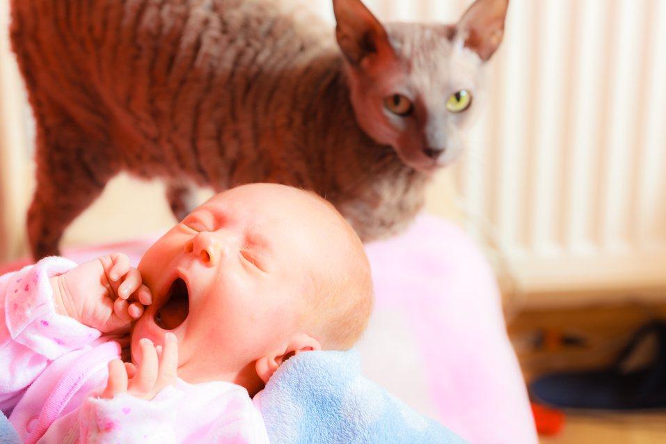 許多家中有養毛小孩的家長一定要特別注意牠們的動向,寵物或許無意傷人,但一不留意仍...