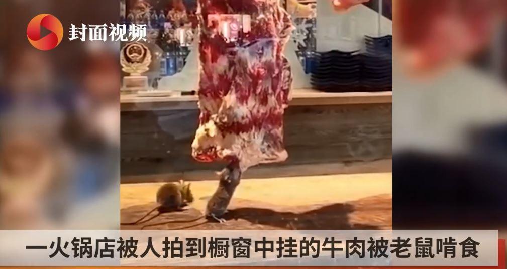 大陸一間火鍋店,被人目睹並拍下老鼠狂啃掛在餐台上的肉塊。圖擷自封面視頻