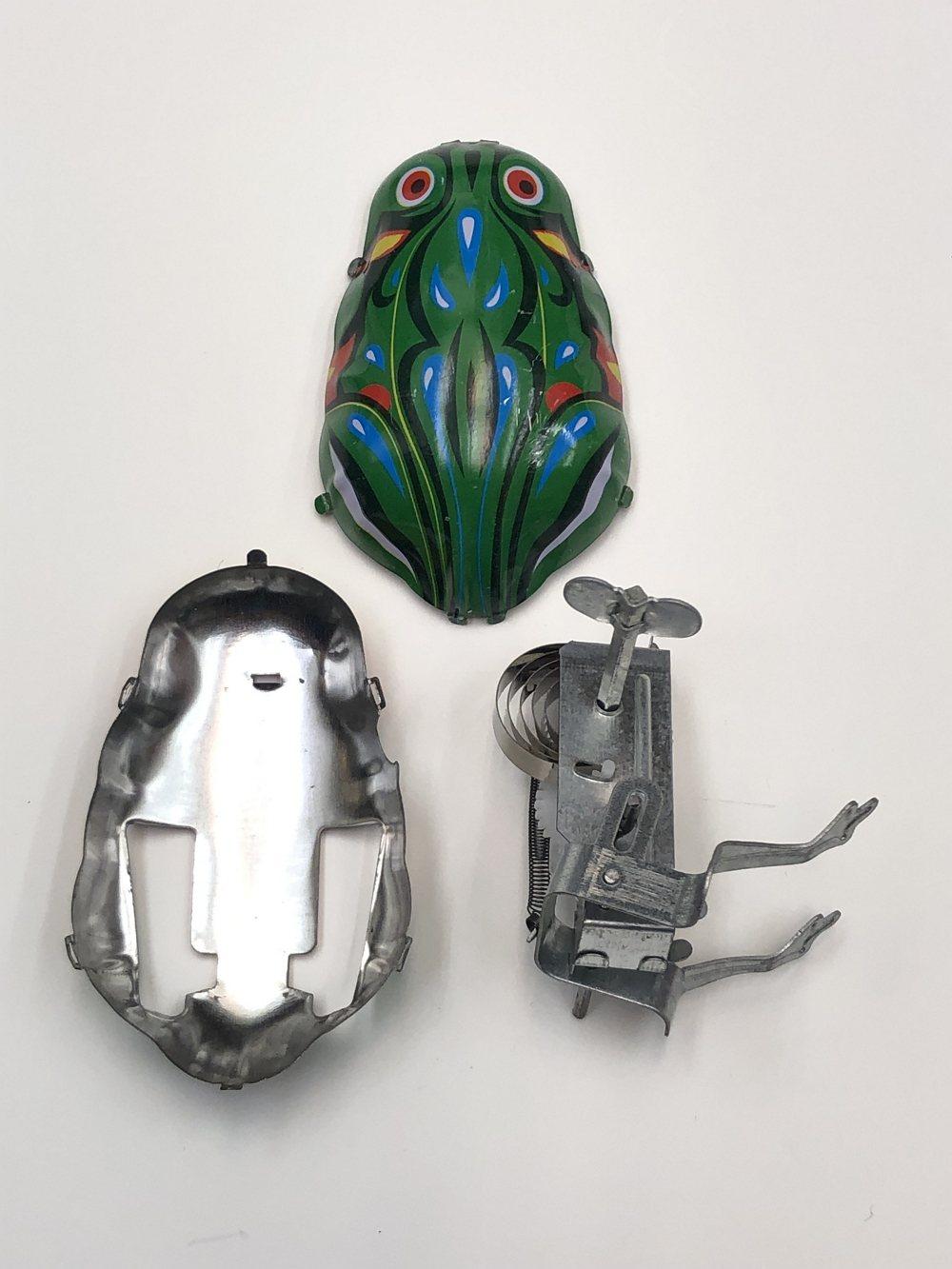 解剖鐵皮青蛙。 圖/野蜂國際開發有限公司 提供