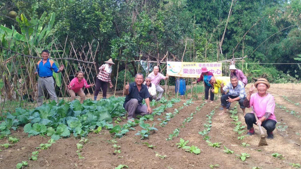 台南市龍崎嶇樂齡中心清泉班學員,在開心農場快樂種菜。圖/台南市教育局提供