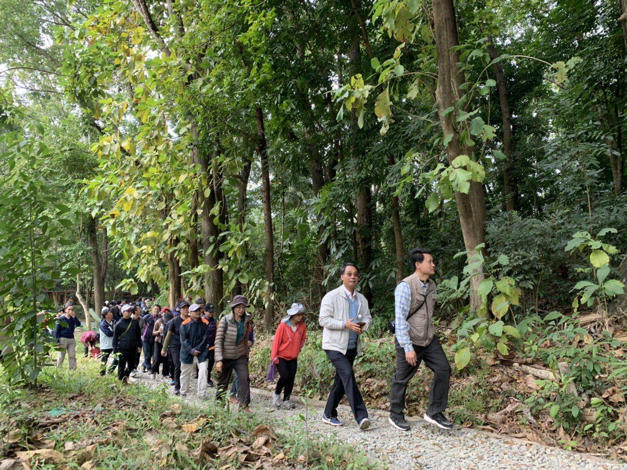 中興大學新化林場有全國最大的桃花心木造林。記者吳淑玲/攝影