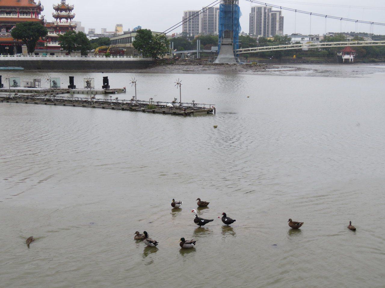 桃園龍潭大池配合環保局水質淨化工程進行,陸續排流水降低水位。記者張弘昌/攝影