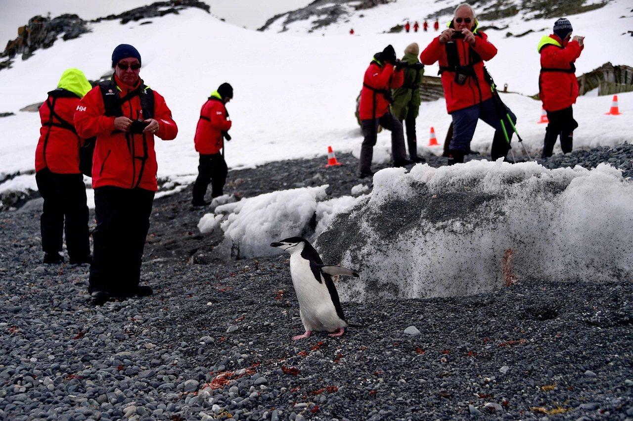 「阿蒙森號」乘客11月9日登上南極半月島(Half Moon Island),近...