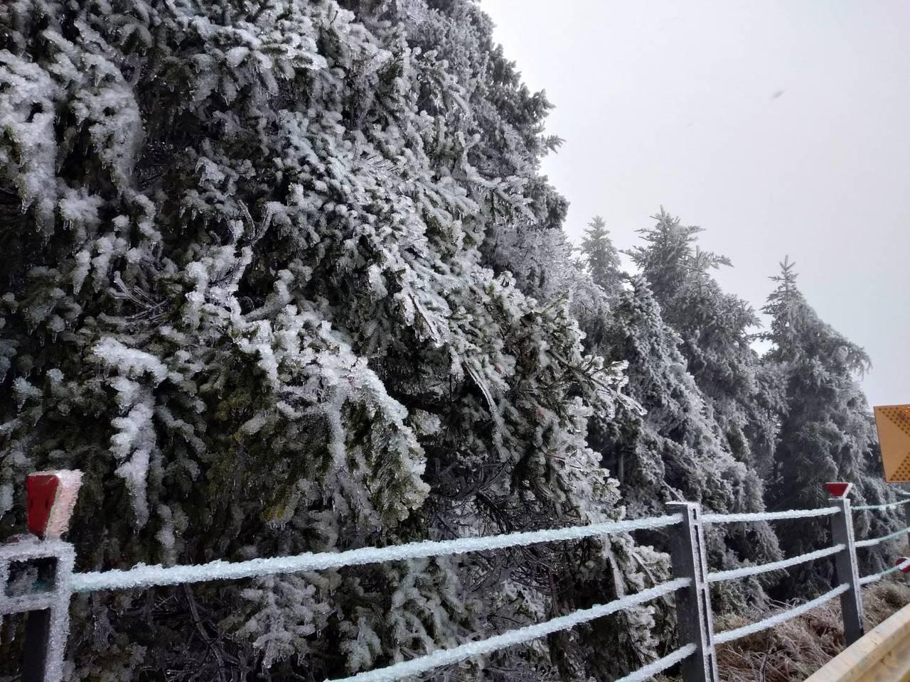 合歡山區今天午後飄雪,台14甲位於高山的路段,沿線可見枝葉結冰。圖/新城警分局提...