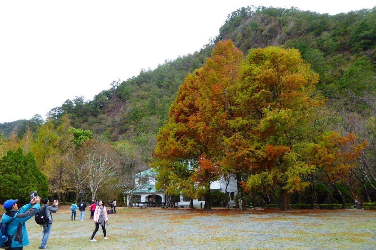 奧萬大正值楓紅季節,南投林管處提醒遊客,要特別注意山區步道路況,民眾活動請避免嬉...