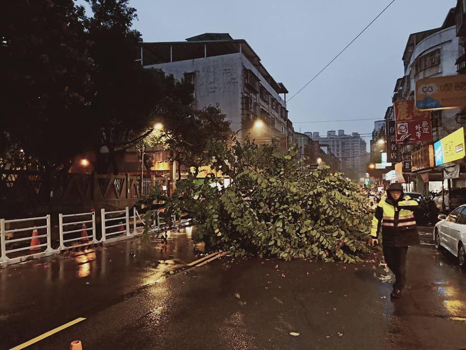 新北市土城區學府路一段,今天清晨2棵路樹倒塌,警方獲報先行到場處理。圖/警方提供