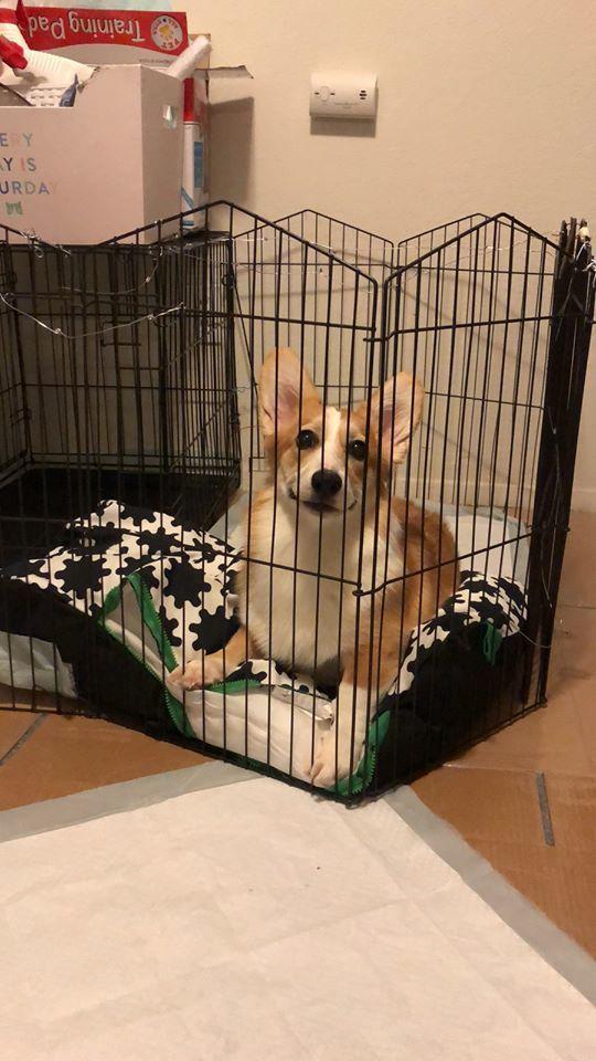 張黃銘因涉嫌虐待寵物狗致死,被警方移送法辦。圖為張黃銘的寵物狗Ayo健康時的照片...