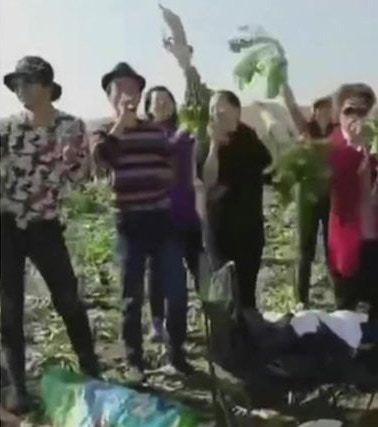有人拔蘿蔔後興奮得揮動蘿蔔唱歌跳舞。圖翻攝自微博