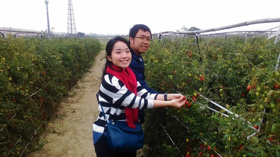 「2019路竹番茄節」今、明兩天舉辦,遊客可搭乘接駁專車至下坑番茄農地,體驗採收...