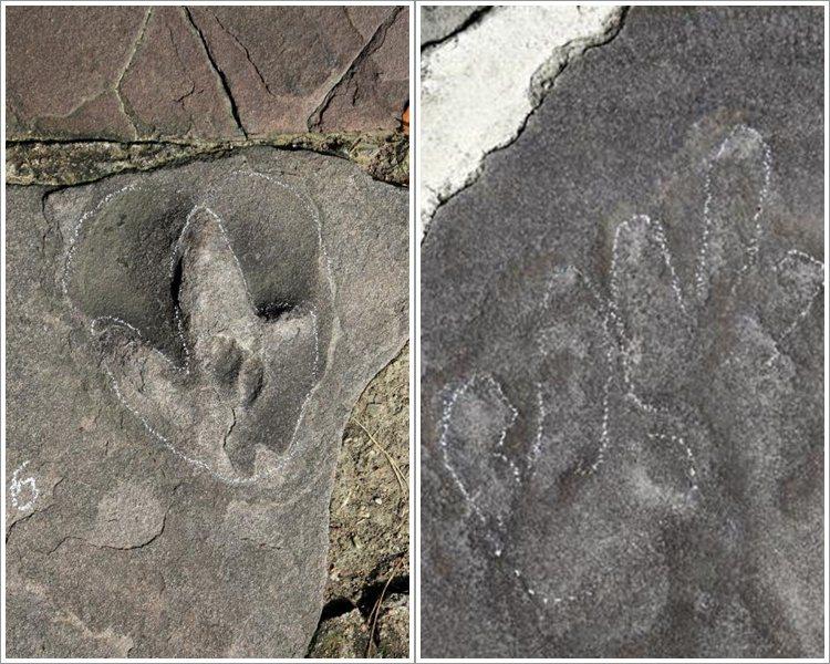 承德避暑山莊發現發現逾300處侏羅紀恐龍足迹。網路圖片