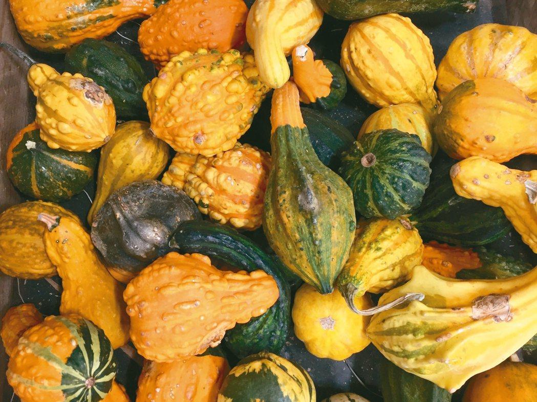 各式各樣的食用和裝飾性的中小型南瓜。 朱慧芳