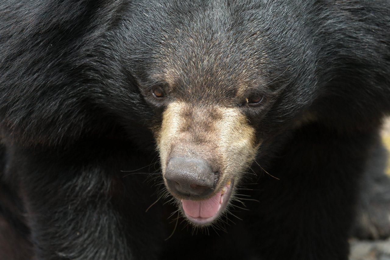 日本新潟縣南魚沼市一家診所業者今(8日)上午發現有熊在診所倉庫,報警處理。警察趕...