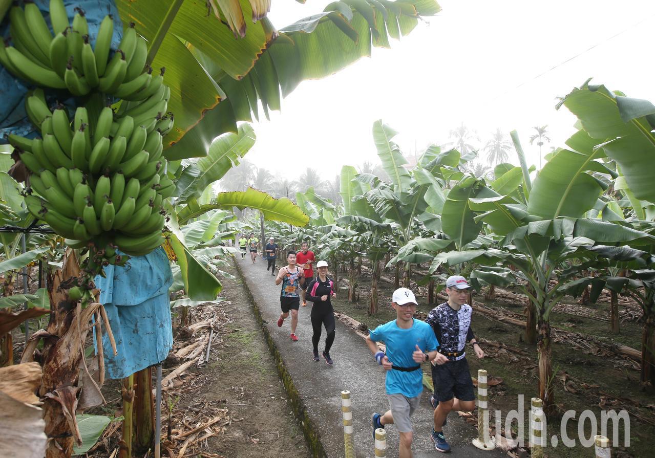 第三屆旗山香蕉馬拉松今晨開跑,全台超過5000位跑友齊聚旗山,跑者在詩意綿綿的霧...