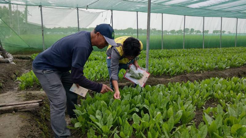 台大植醫團隊親自到農友的田區進行全方位評估。圖/雲林縣府提供