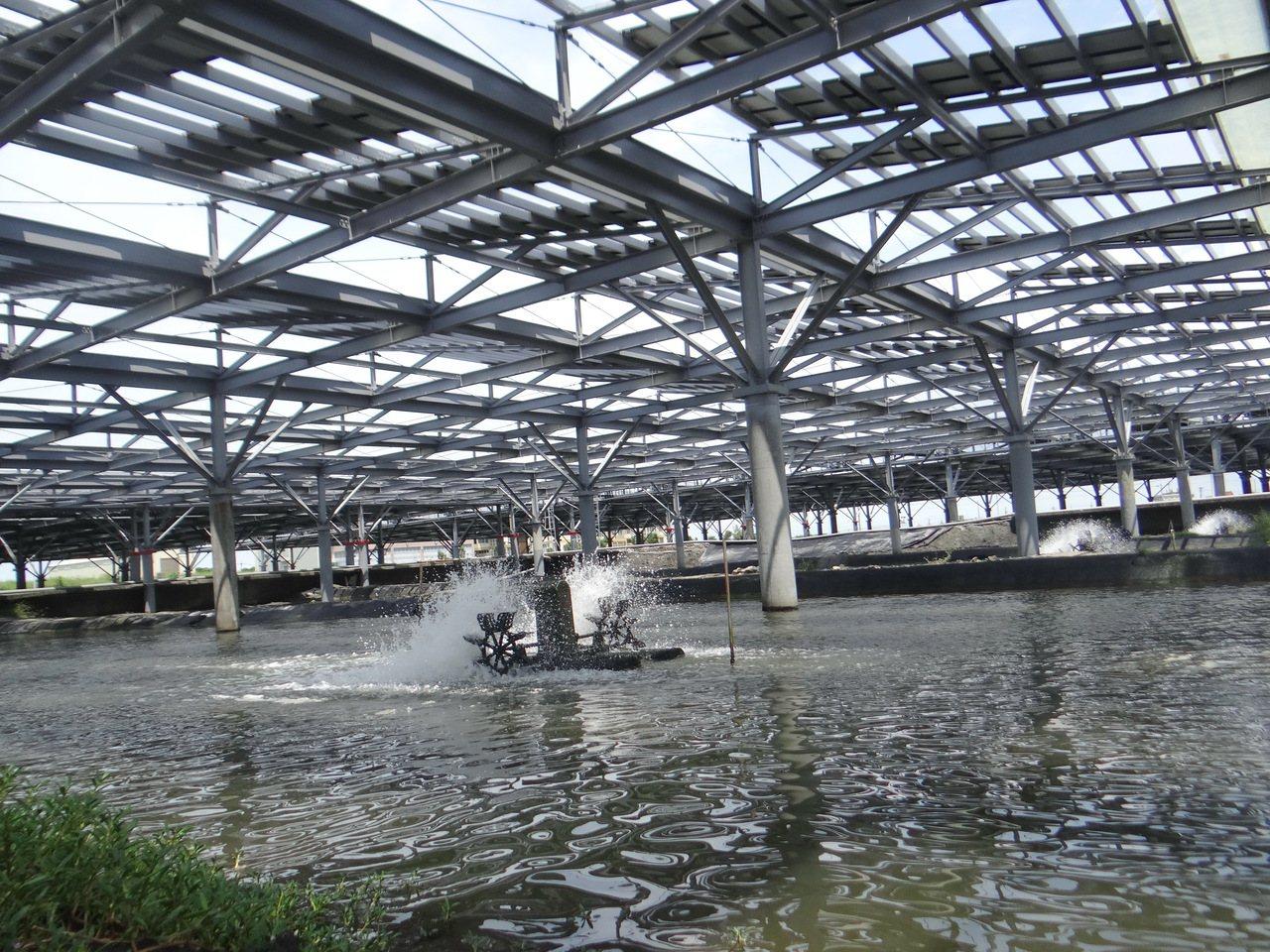 水產試驗所經過一年多漁電共生養殖試驗成功,日前開記者會發表成果。記者蔡維斌/攝影