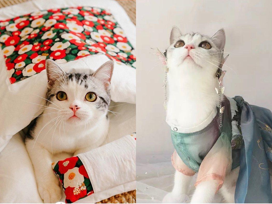 寵物被窩和寵物漢服。圖/阿里巴巴集團旗下新媒體天下網商