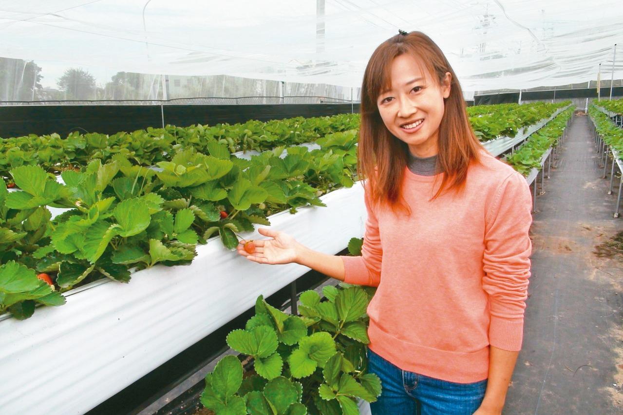 工程師回家種草莓 獲百大青農