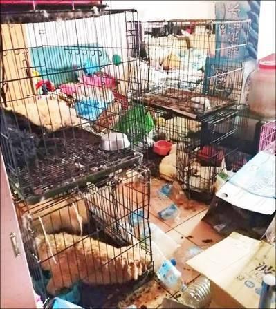周男領養貴賓等18隻狗因疾病、缺水、飢餓相繼倒斃,籠外犬隻屍體遭其他犬隻啃咬,屍...